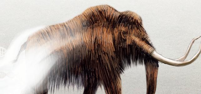 Mammutens återkomst